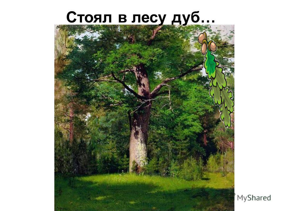 Стоял в лесу дуб…