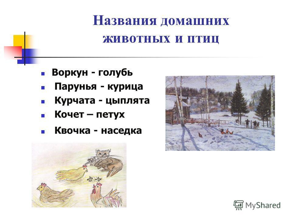 Названия домашних животных и птиц Воркун - голубь Парунья - курица Курчата - цыплята Кочет – петух Квочка - наседка