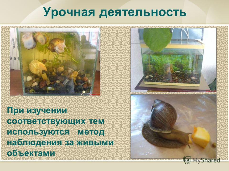 Урочная деятельность При изучении соответствующих тем используются метод наблюдения за живыми объектами
