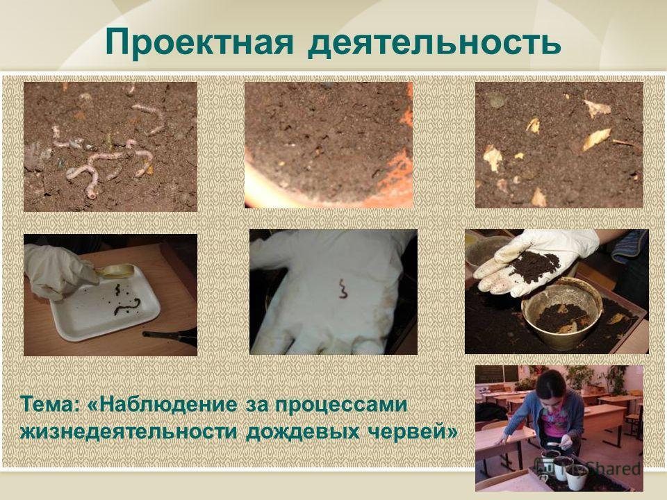 Проектная деятельность Тема: «Наблюдение за процессами жизнедеятельности дождевых червей»