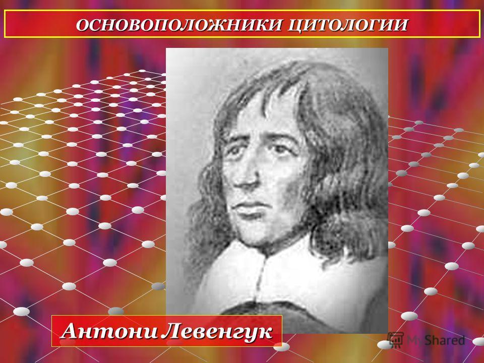 ОСНОВОПОЛОЖНИКИ ЦИТОЛОГИИ Антони Левенгук