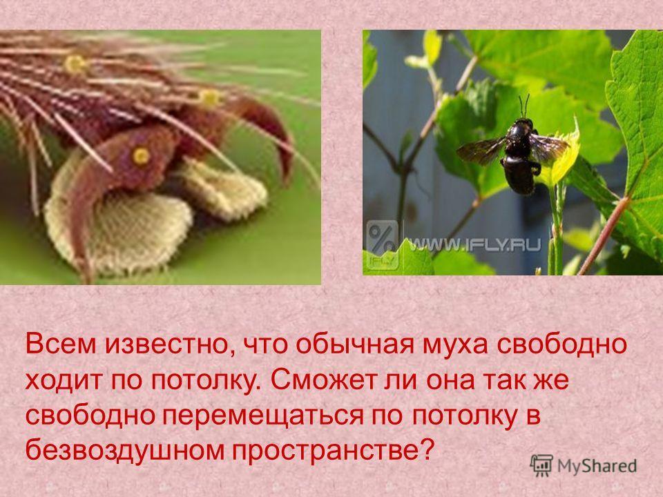 Всем известно, что обычная муха свободно ходит по потолку. Сможет ли она так же свободно перемещаться по потолку в безвоздушном пространстве?