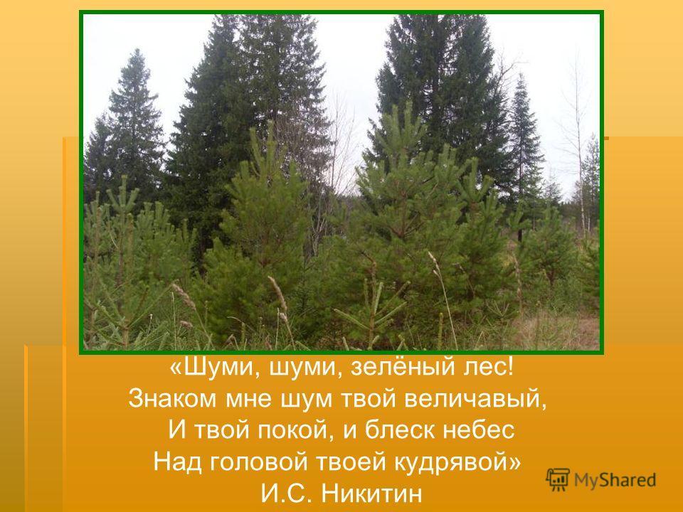 «Шуми, шуми, зелёный лес! Знаком мне шум твой величавый, И твой покой, и блеск небес Над головой твоей кудрявой» И.С. Никитин