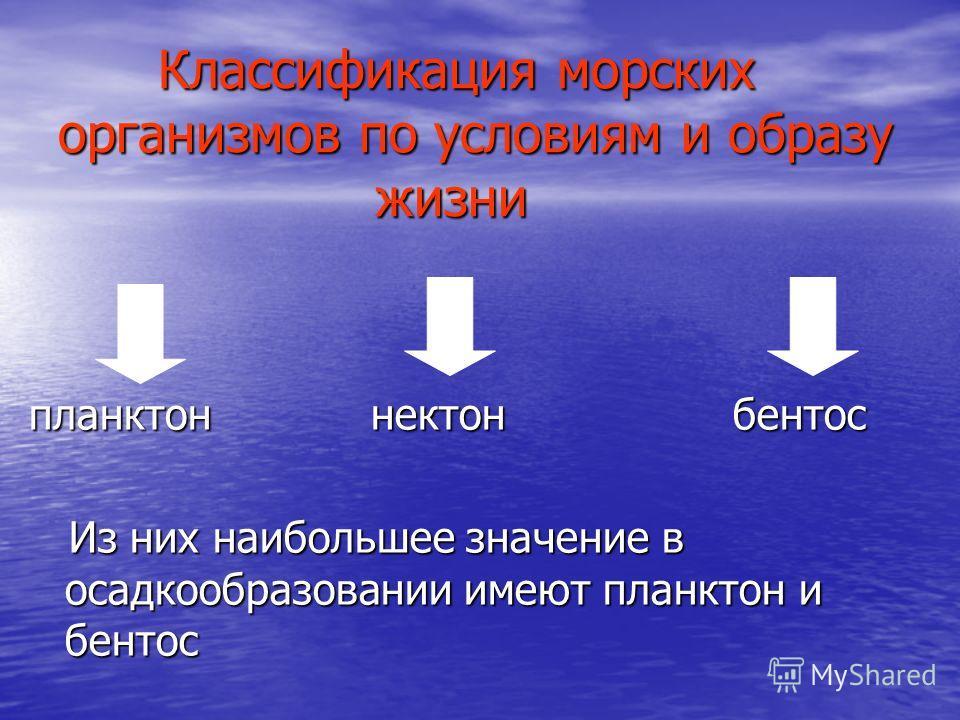 Классификация морских организмов по условиям и образу жизни Классификация морских организмов по условиям и образу жизни планктон нектон бентос Из них наибольшее значение в осадкообразовании имеют планктон и бентос Из них наибольшее значение в осадкоо