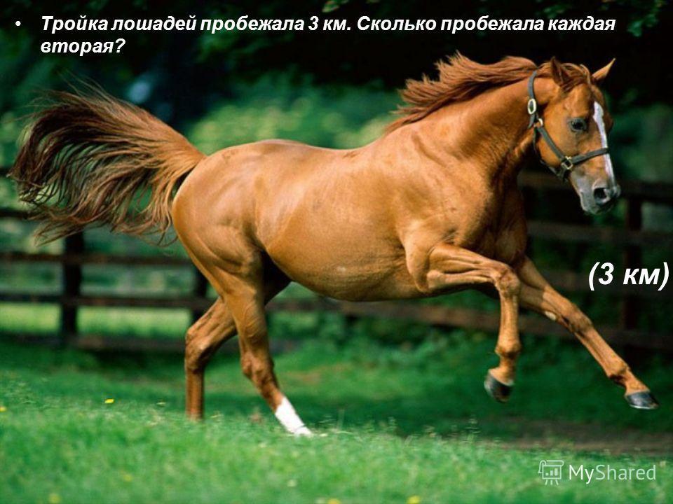 Тройка лошадей пробежала 3 км. Сколько пробежала каждая вторая? (3 км)