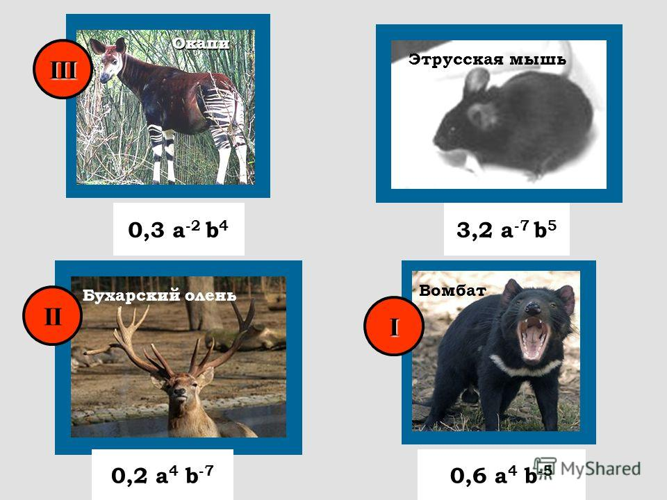 Окапи Этрусская мышь 0,3 а -2 b 4 0,2 a 4 b -7 0,6 a 4 b -5 3,2 a -7 b 5 Бухарский олень Вомбат I II III