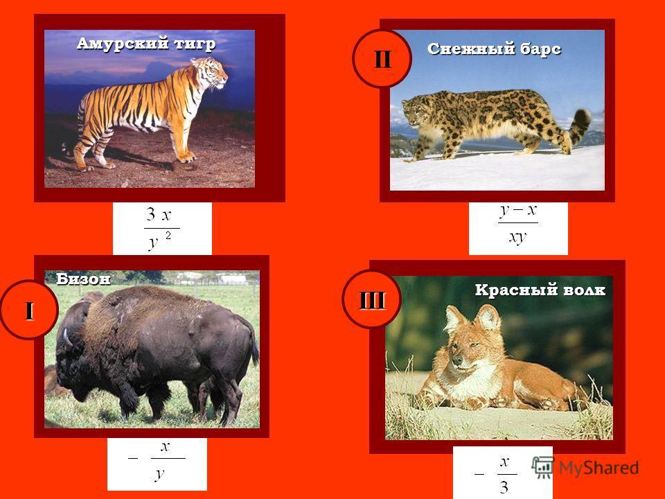 Амурский тигр Красный волк Снежный барс Бизон I II III