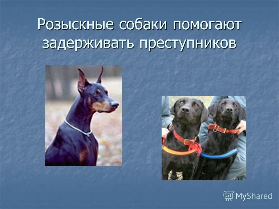 Розыскные собаки помогают задерживать преступников