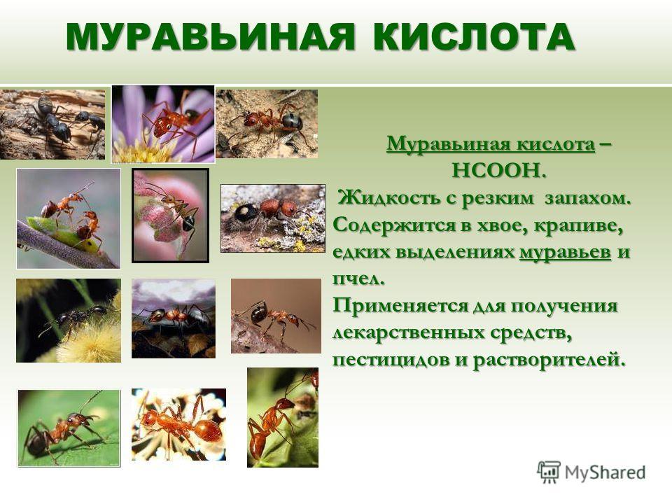 МУРАВЬИНАЯ КИСЛОТА Муравьиная кислота – НСООН. Жидкость с резким запахом. Содержится в хвое, крапиве, едких выделениях муравьев и пчел. Жидкость с резким запахом. Содержится в хвое, крапиве, едких выделениях муравьев и пчел. Применяется для получения