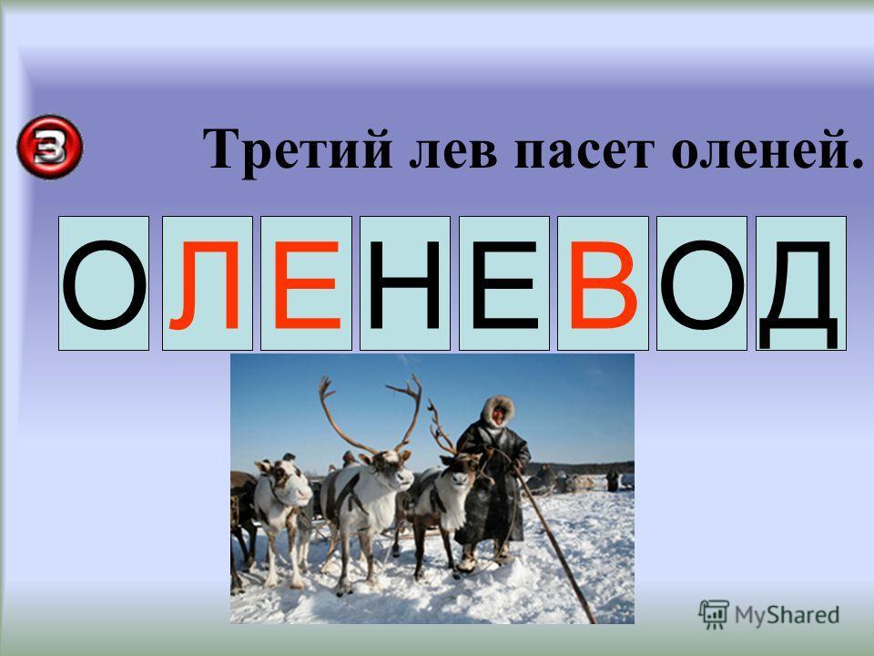 Третий лев пасет оленей. ЛЕВ ОНЕОД