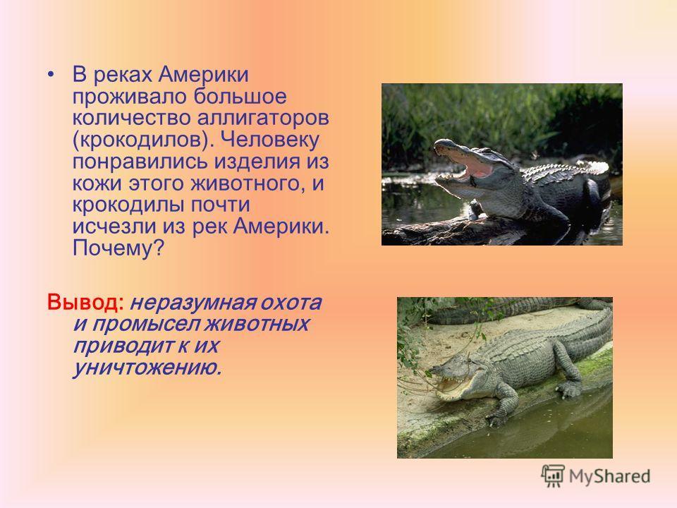 В реках Америки проживало большое количество аллигаторов (крокодилов). Человеку понравились изделия из кожи этого животного, и крокодилы почти исчезли из рек Америки. Почему? Вывод: неразумная охота и промысел животных приводит к их уничтожению.