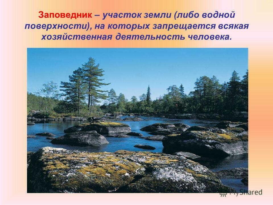Заповедник – участок земли (либо водной поверхности), на которых запрещается всякая хозяйственная деятельность человека.
