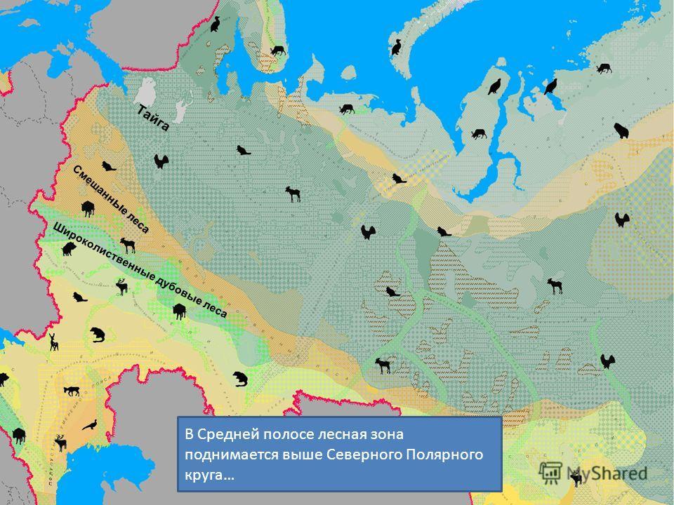 Смешанн ы е леса Тайга Широколиственные дубовые леса В Средней полосе лесная зона поднимается выше Северного Полярного круга…