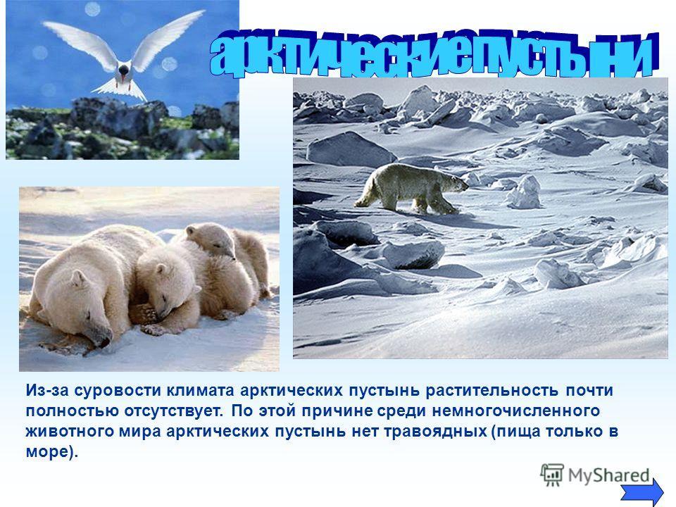 Из-за суровости климата арктических пустынь растительность почти полностью отсутствует. По этой причине среди немногочисленного животного мира арктических пустынь нет травоядных (пища только в море).