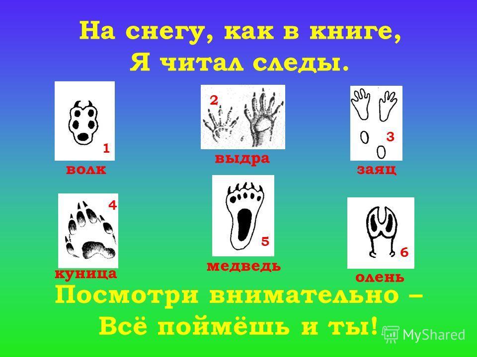 1 2 3 4 5 6 На снегу, как в книге, Я читал следы. Посмотри внимательно – Всё поймёшь и ты! волк выдра заяц куница медведь олень