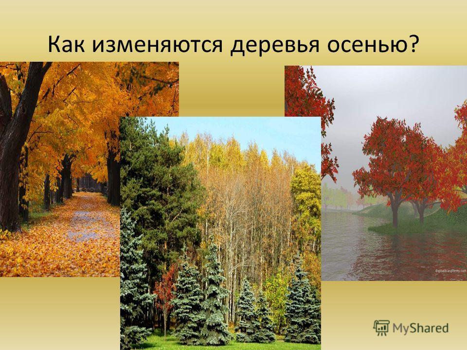 Как изменяются деревья осенью?