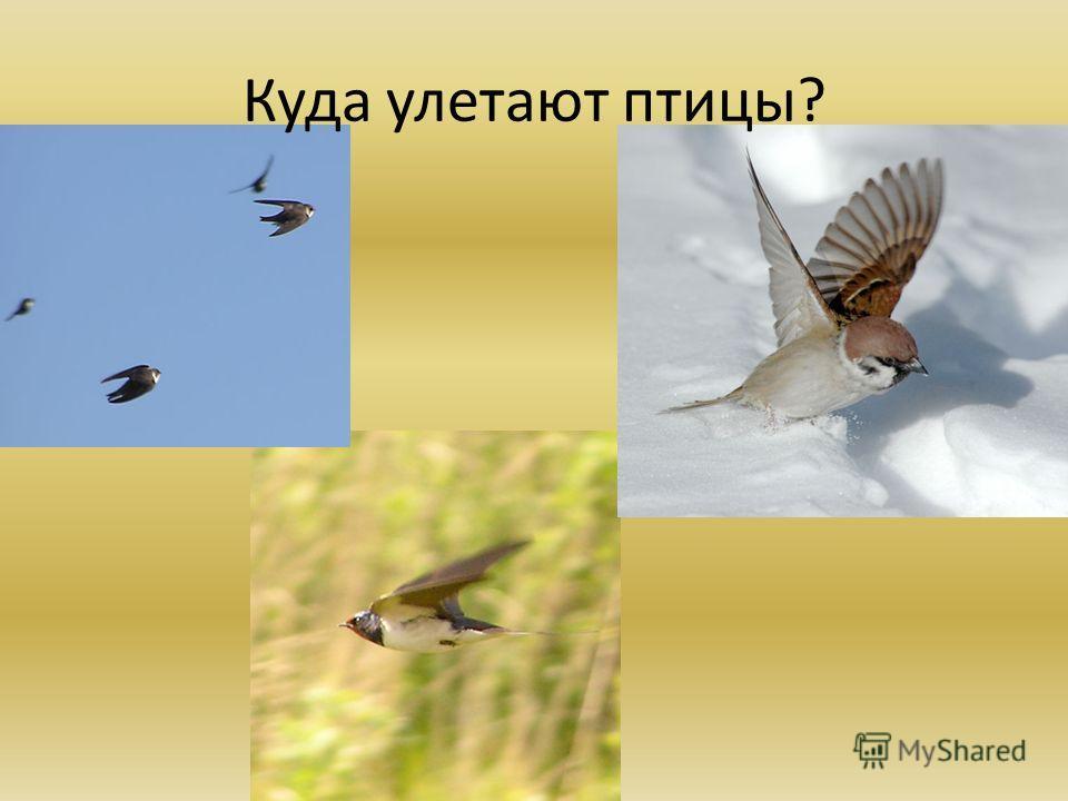 Куда улетают птицы?