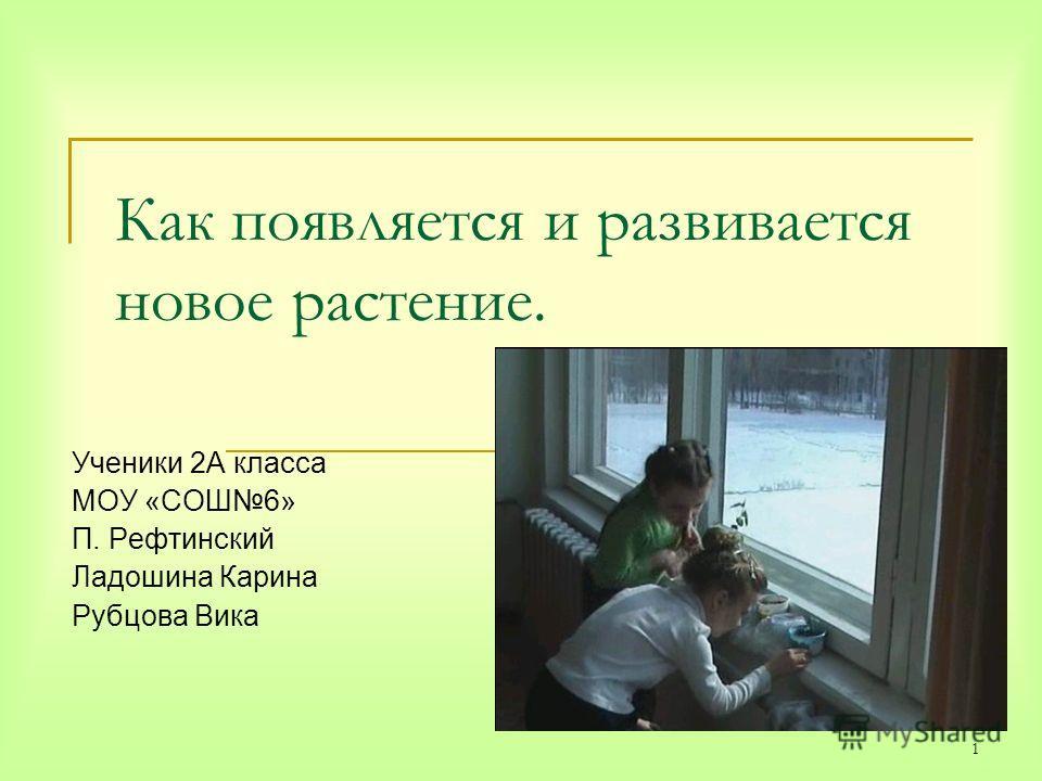 1 Как появляется и развивается новое растение. Ученики 2А класса МОУ «СОШ6» П. Рефтинский Ладошина Карина Рубцова Вика