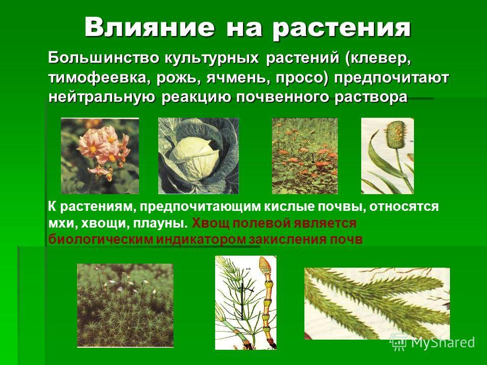 Влияние на растения Большинство культурных растений (клевер, тимофеевка, рожь, ячмень, просо) предпочитают нейтральную реакцию почвенного раствора Большинство культурных растений (клевер, тимофеевка, рожь, ячмень, просо) предпочитают нейтральную реак