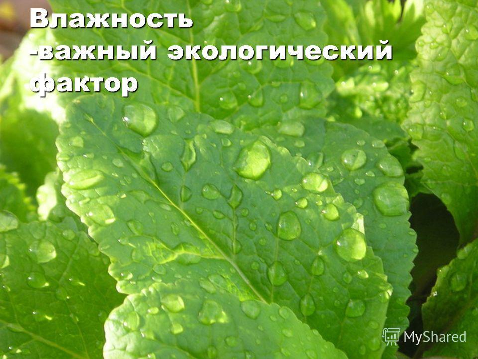 Влажность -важный экологический фактор