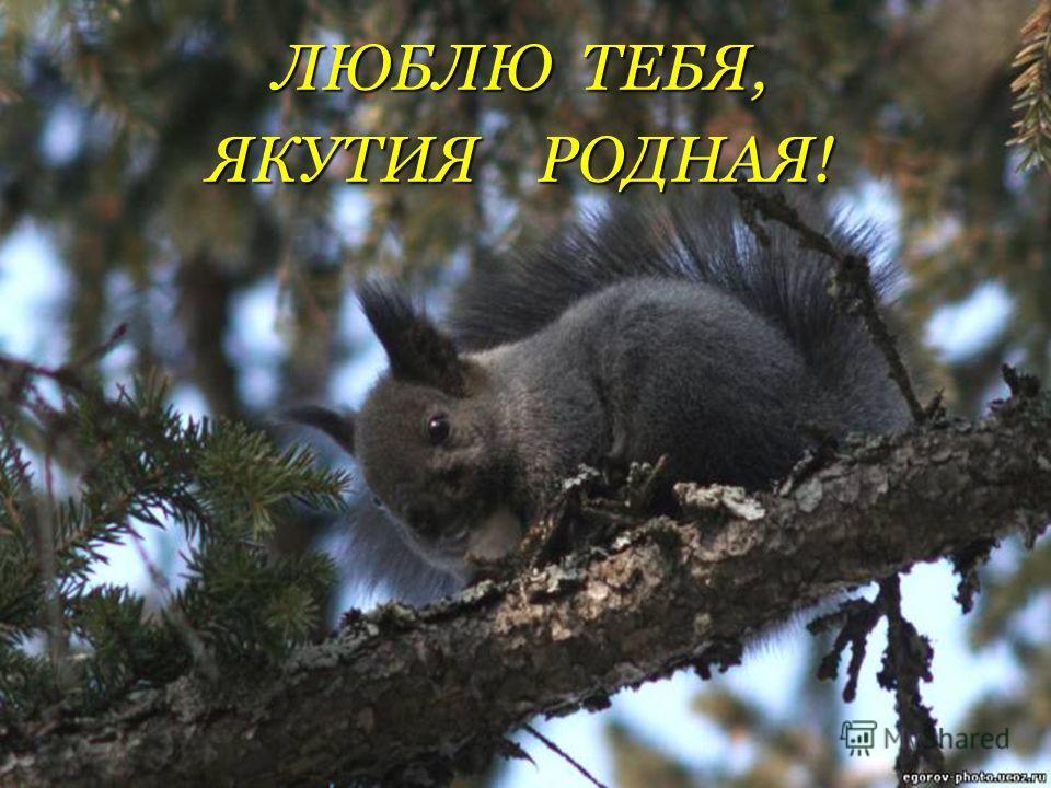 ЛЮБЛЮ ТЕБЯ, ЯКУТИЯ РОДНАЯ!
