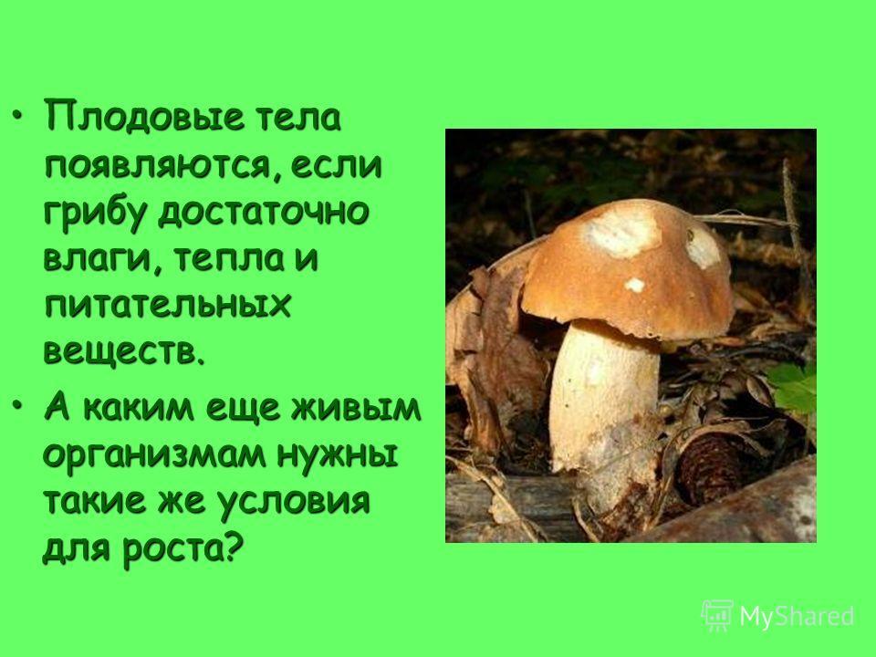 А это очень маленькие, но тоже грибы! Кефирный грибок Дрожжевые грибки Пенициллин