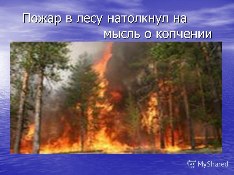Пожар в лесу натолкнул на мысль о копчении Пожар в лесу натолкнул на мысль о копчении