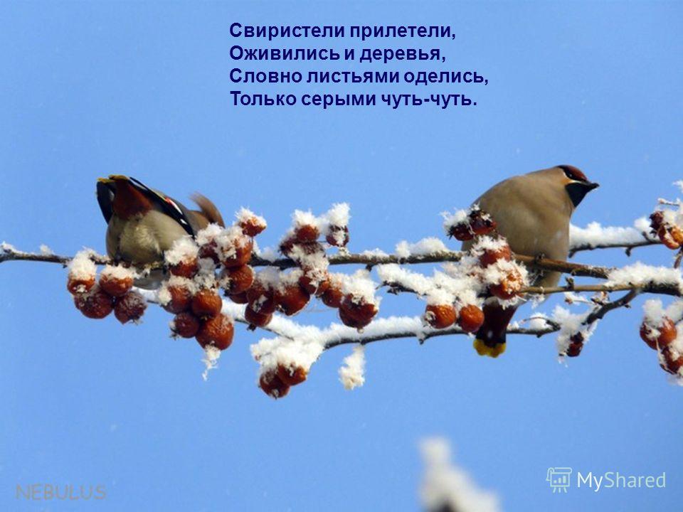 Свиристели прилетели, Оживились и деревья, Словно листьями оделись, Только серыми чуть-чуть.