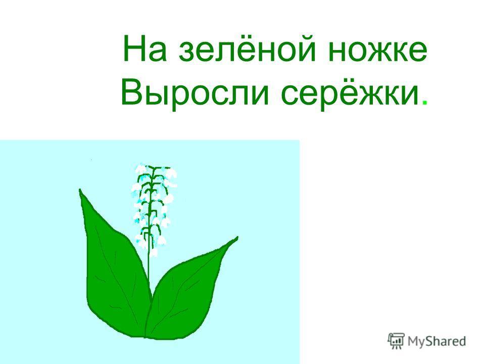 На зелёной ножке Выросли серёжки.