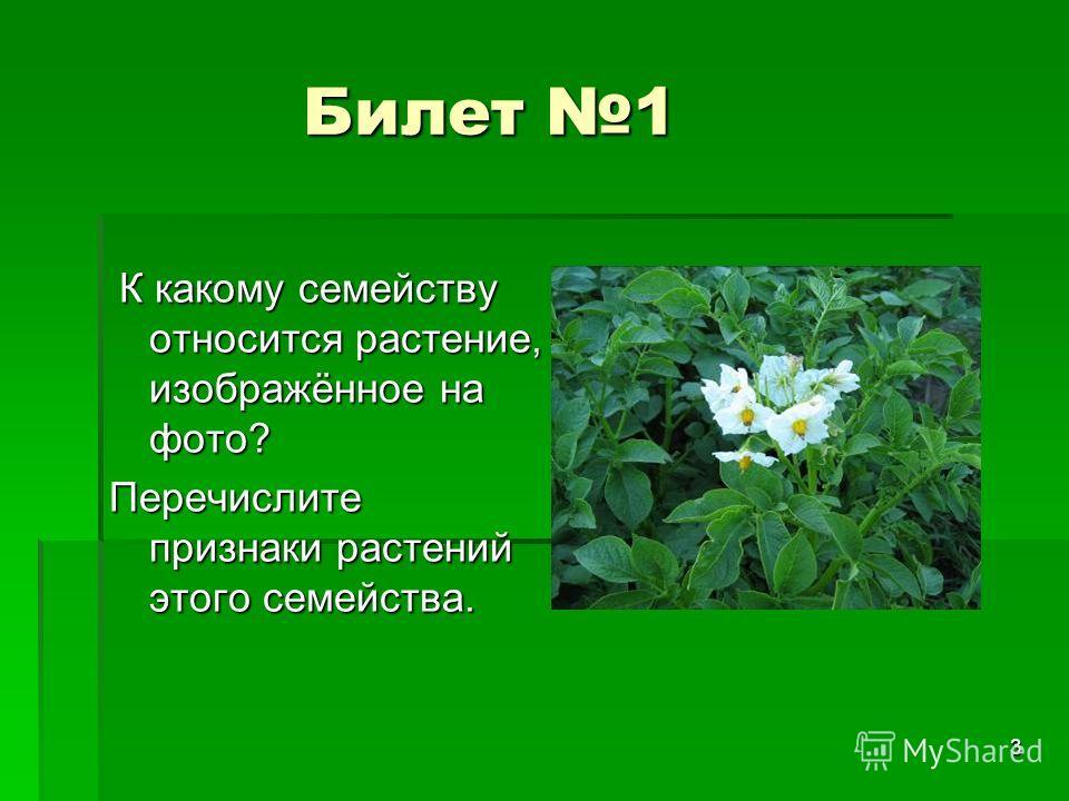 3 Билет 1 Билет 1 К какому семейству относится растение, изображённое на фото? К какому семейству относится растение, изображённое на фото? Перечислите признаки растений этого семейства.