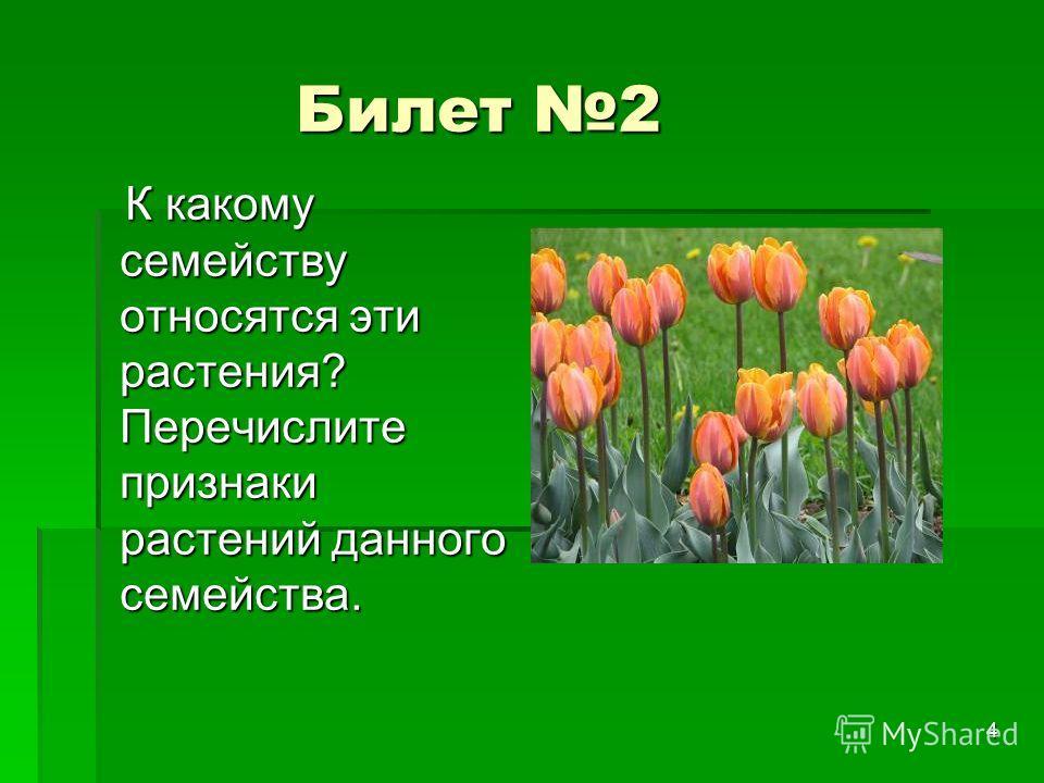 4 Билет 2 Билет 2 К какому семейству относятся эти растения? Перечислите признаки растений данного семейства. К какому семейству относятся эти растения? Перечислите признаки растений данного семейства.