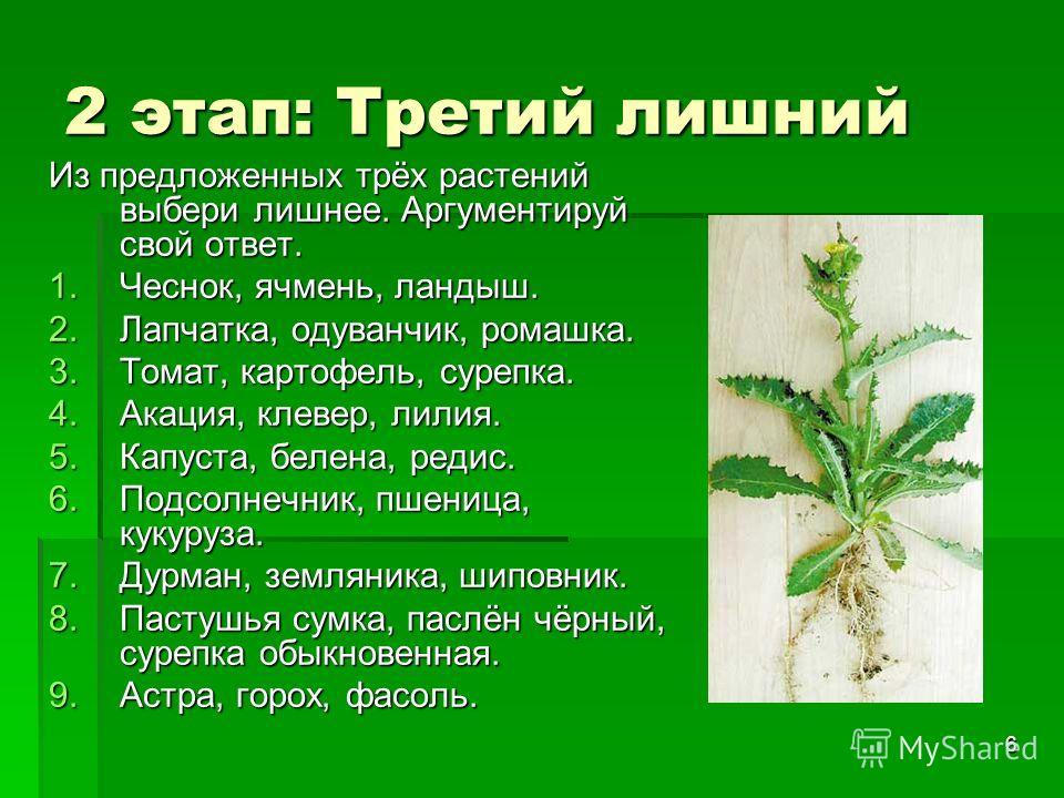 6 2 этап: Третий лишний Из предложенных трёх растений выбери лишнее. Аргументируй свой ответ. 1.Чеснок, ячмень, ландыш. 2.Лапчатка, одуванчик, ромашка. 3.Томат, картофель, сурепка. 4.Акация, клевер, лилия. 5.Капуста, белена, редис. 6.Подсолнечник, пш