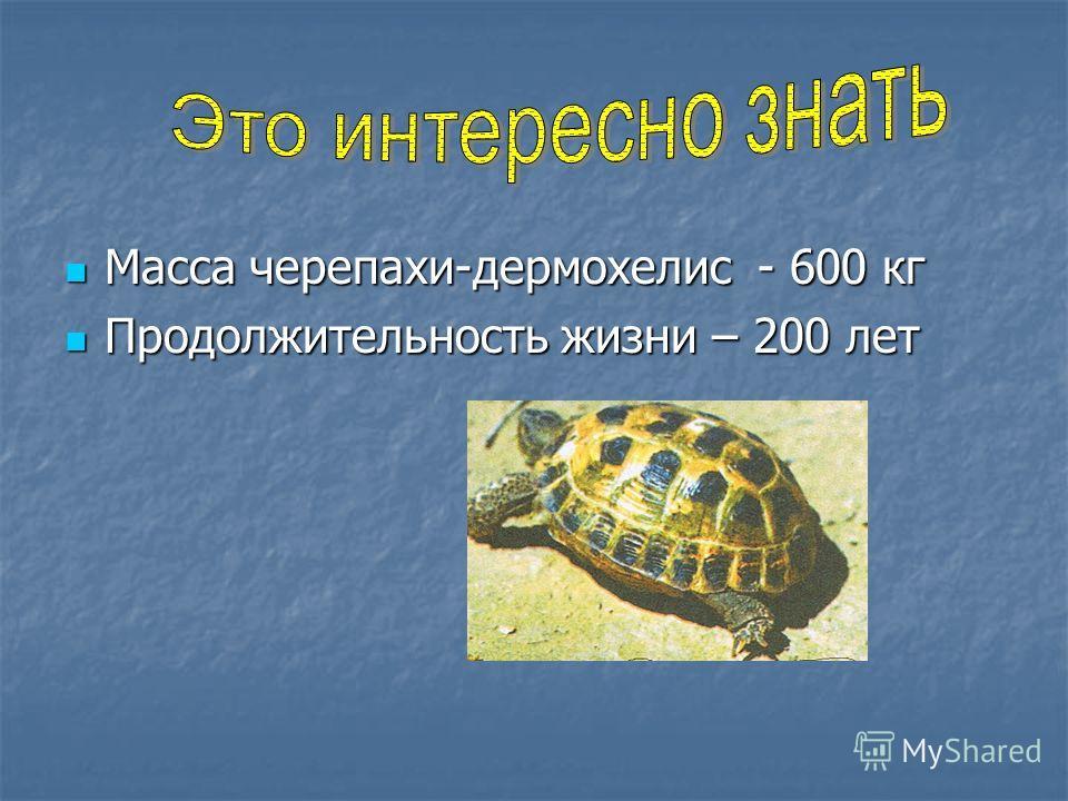 Масса черепахи-дермохелис - 600 кг Масса черепахи-дермохелис - 600 кг Продолжительность жизни – 200 лет Продолжительность жизни – 200 лет