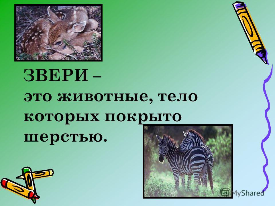 ЗВЕРИ – это животные, тело которых покрыто шерстью.
