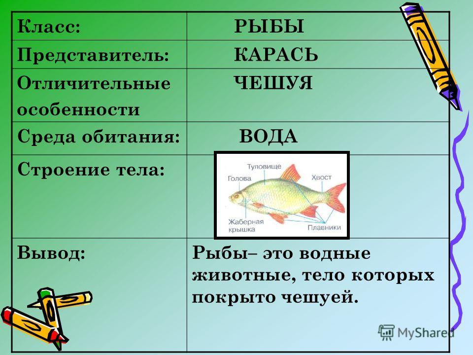 Класс: РЫБЫ Представитель: КАРАСЬ Отличительные особенности ЧЕШУЯ Среда обитания: ВОДА Строение тела: Вывод:Рыбы– это водные животные, тело которых покрыто чешуей.