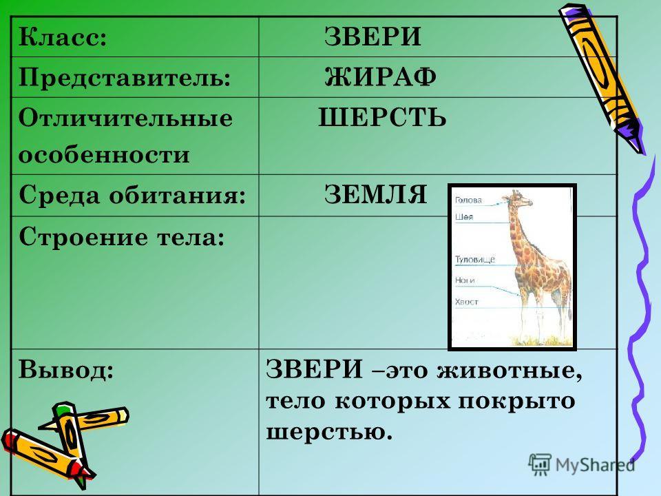 Класс: ЗВЕРИ Представитель: ЖИРАФ Отличительные особенности ШЕРСТЬ Среда обитания: ЗЕМЛЯ Строение тела: Вывод:ЗВЕРИ –это животные, тело которых покрыто шерстью.