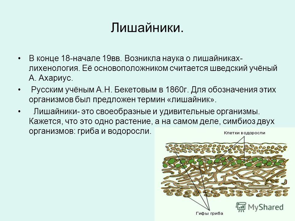 Лишайники. В конце 18-начале 19вв. Возникла наука о лишайниках- лихенология. Её основоположником считается шведский учёный А. Ахариус. Русским учёным А.Н. Бекетовым в 1860г. Для обозначения этих организмов был предложен термин «лишайник». Лишайники-