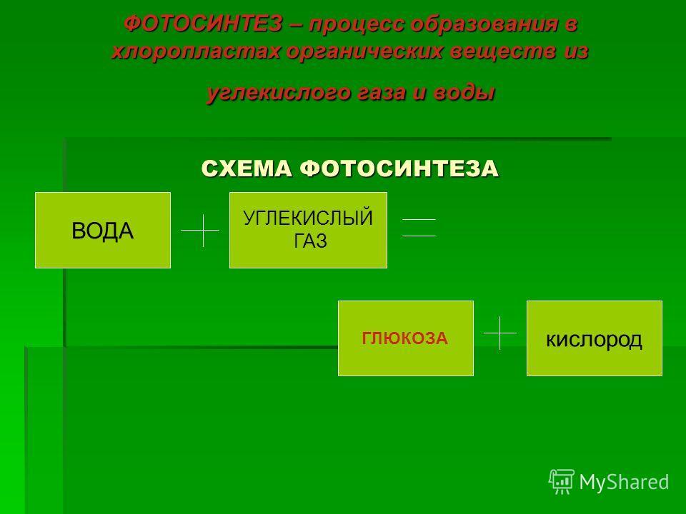 ФОТОСИНТЕЗ – процесс образования в хлоропластах органических веществ из углекислого газа и воды СХЕМА ФОТОСИНТЕЗА ВОДА УГЛЕКИСЛЫЙ ГАЗ кислород ГЛЮКОЗА