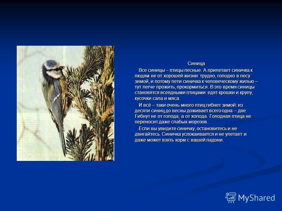 Синица Все синицы – птицы лесные. А прилетает синичка к людям не от хорошей жизни: трудно, голодно в лесу зимой, и потому лети синичка к человеческому жилью – тут легче прожить, прокормиться. В это время синицы становятся всеядными птицами: едят крош