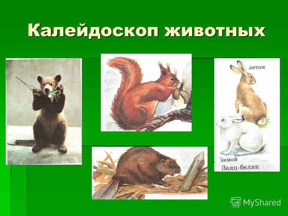 Калейдоскоп животных