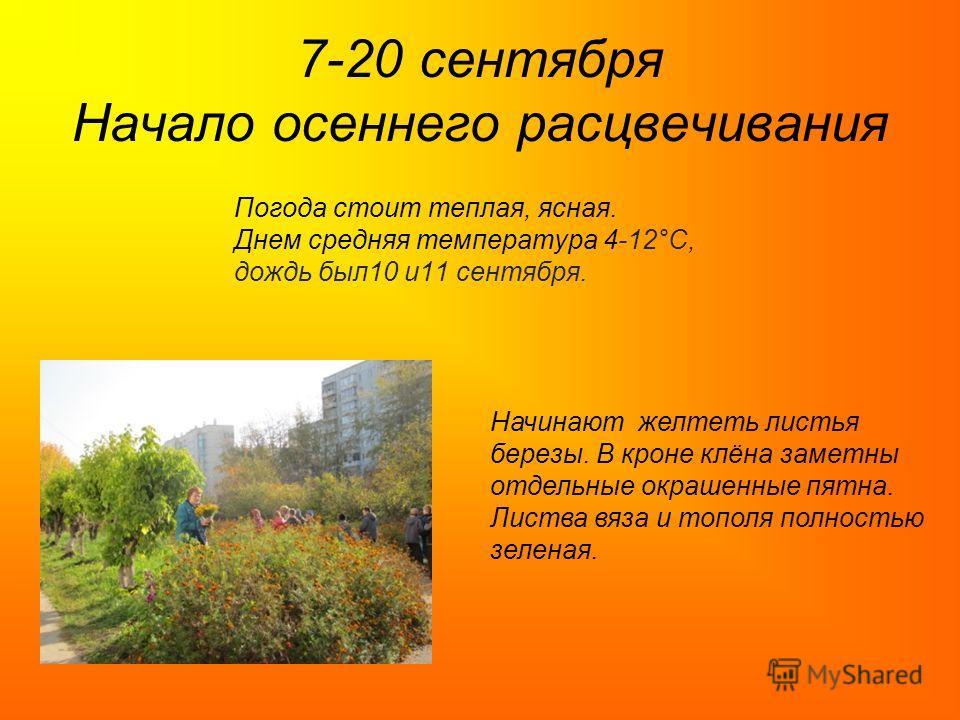 7-20 сентября Начало осеннего расцвечивания Погода стоит теплая, ясная. Днем средняя температура 4-12°C, дождь был10 и11 сентября. Начинают желтеть листья березы. В кроне клёна заметны отдельные окрашенные пятна. Листва вяза и тополя полностью зелена