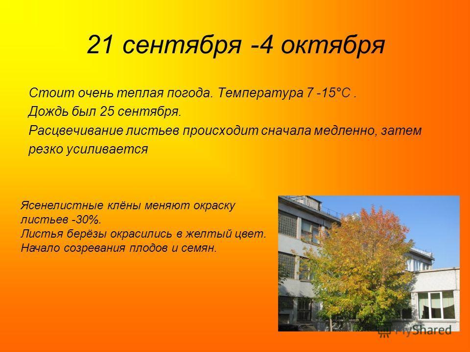 21 сентября -4 октября Стоит очень теплая погода. Температура 7 -15°C. Дождь был 25 сентября. Расцвечивание листьев происходит сначала медленно, затем резко усиливается Ясенелистные клёны меняют окраску листьев -30%. Листья берёзы окрасились в желтый
