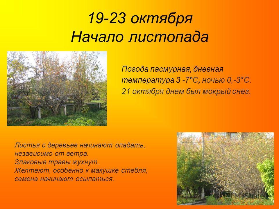 19-23 октября Начало листопада Погода пасмурная, дневная температура 3 -7°C, ночью 0,-3°C. 21 октября днем был мокрый снег. Листья с деревьев начинают опадать, независимо от ветра. Злаковые травы жухнут. Желтеют, особенно к макушке стебля, семена нач