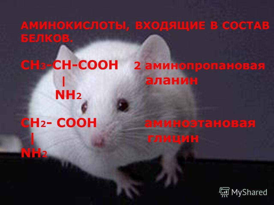 АМИНОКИСЛОТЫ, ВХОДЯЩИЕ В СОСТАВ БЕЛКОВ. CH 3 -CH-COOH 2 аминопропановая | аланин NH 2 CH 2 - COOH аминоэтановая | глицин NH 2