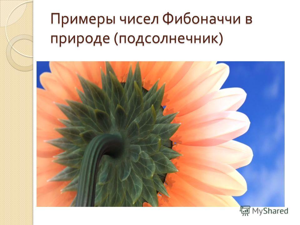 Примеры чисел Фибоначчи в природе ( подсолнечник )
