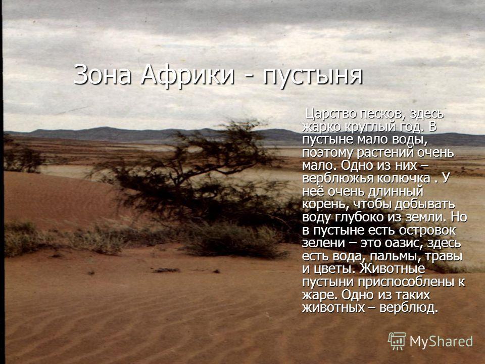 Зона Африки - пустыня Царство песков, здесь жарко круглый год. В пустыне мало воды, поэтому растений очень мало. Одно из них – верблюжья колючка. У неё очень длинный корень, чтобы добывать воду глубоко из земли. Но в пустыне есть островок зелени – эт