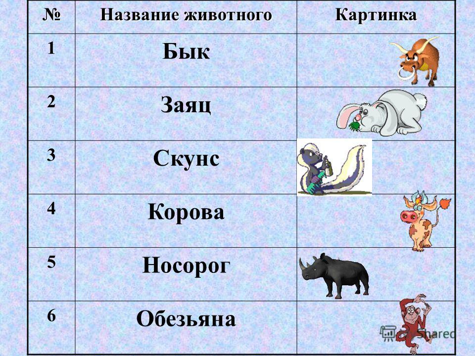 Название животного Картинка 1 Бык 2 Заяц 3 Скунс 4 Корова 5 Носорог 6 Обезьяна