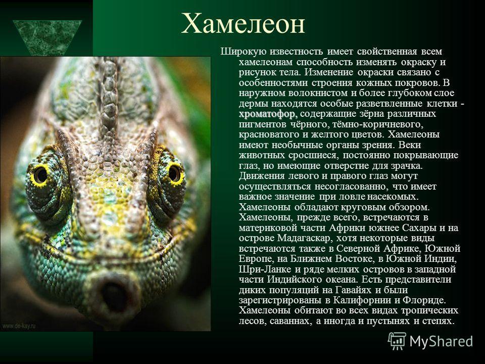 хроматофор, Широкую известность имеет свойственная всем хамелеонам способность изменять окраску и рисунок тела. Изменение окраски связано с особенностями строения кожных покровов. В наружном волокнистом и более глубоком слое дермы находятся особые ра