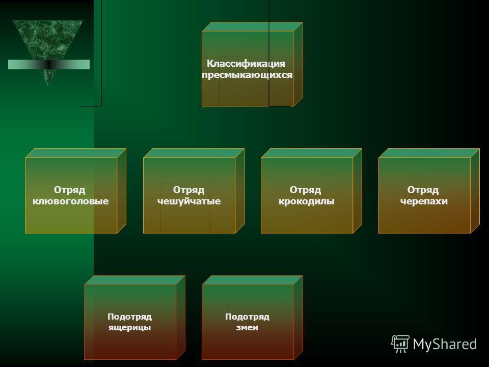 Классификация пресмыкающихся Отряд клювоголовые Отряд чешуйчатые Отряд черепахи Отряд крокодилы Подотряд ящерицы Подотряд змеи