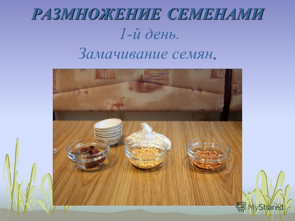 РАЗМНОЖЕНИЕ СЕМЕНАМИ. РАЗМНОЖЕНИЕ СЕМЕНАМИ 1-й день. Замачивание семян.